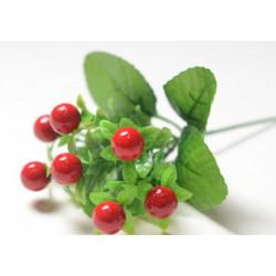 Ветка брусничника Крупные листья и ягоды