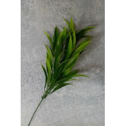Ветка острый лист
