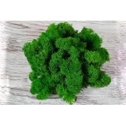 Мох стабилизированный зеленый