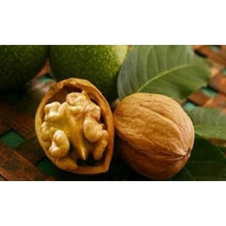 Базовое масло жидкое Грецкого ореха