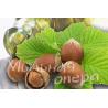 Базовое масло жидкое Лесного ореха