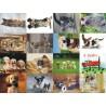 Картинки на водорастворимой бумаге Кошки и собаки