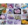 Картинки на водорастворимой бумаге Цветы 2