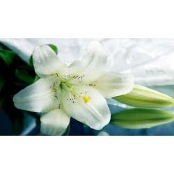 Отдушка косметическая Белая лилия