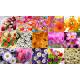 Картинки на водорастворимой бумаге Цветы ПВХ Любимой бабушке