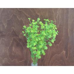 Букет зелени гипсофила