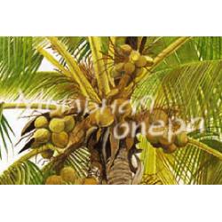 Базовое масло твердое Пальмовое